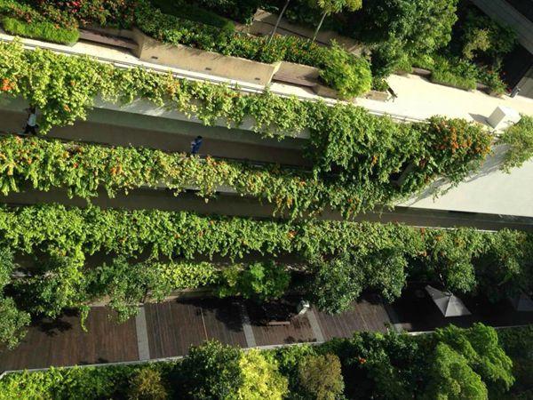 在城市大的空间里,建筑的立面构成了城市空间的立面,高层建筑围合了城市空间的顶平面(一定意义上讲),在城市大地绿化基本饱和的状态下,城市的绿化应该向立面和顶平面延伸,以此增加城市绿化率,丰富城市绿化的层次,提升城市的空气质量和环境质量。 一、立面绿化 空间立面的绿化主要依靠攀援植物,按照攀援植物的分类,吸附类和蔓生类最适宜建筑立面的绿化造景,如五叶地锦、爬山虎、藤本月季等;而在某些景观建筑如棚架、廊道等多选用缠绕类和卷须类如紫藤、凌霄等。当然,某些高大乔木也能起到类似的效果,如挨近建筑物种植的可高达25米甚